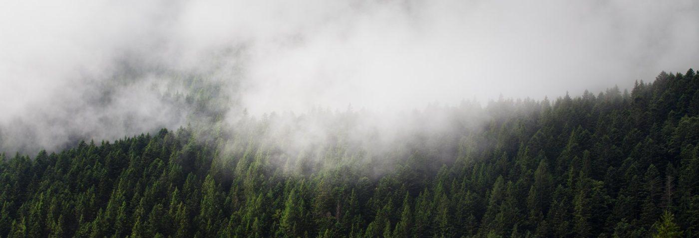 Fotografia e Design, background homepage. Alberi e nebbia