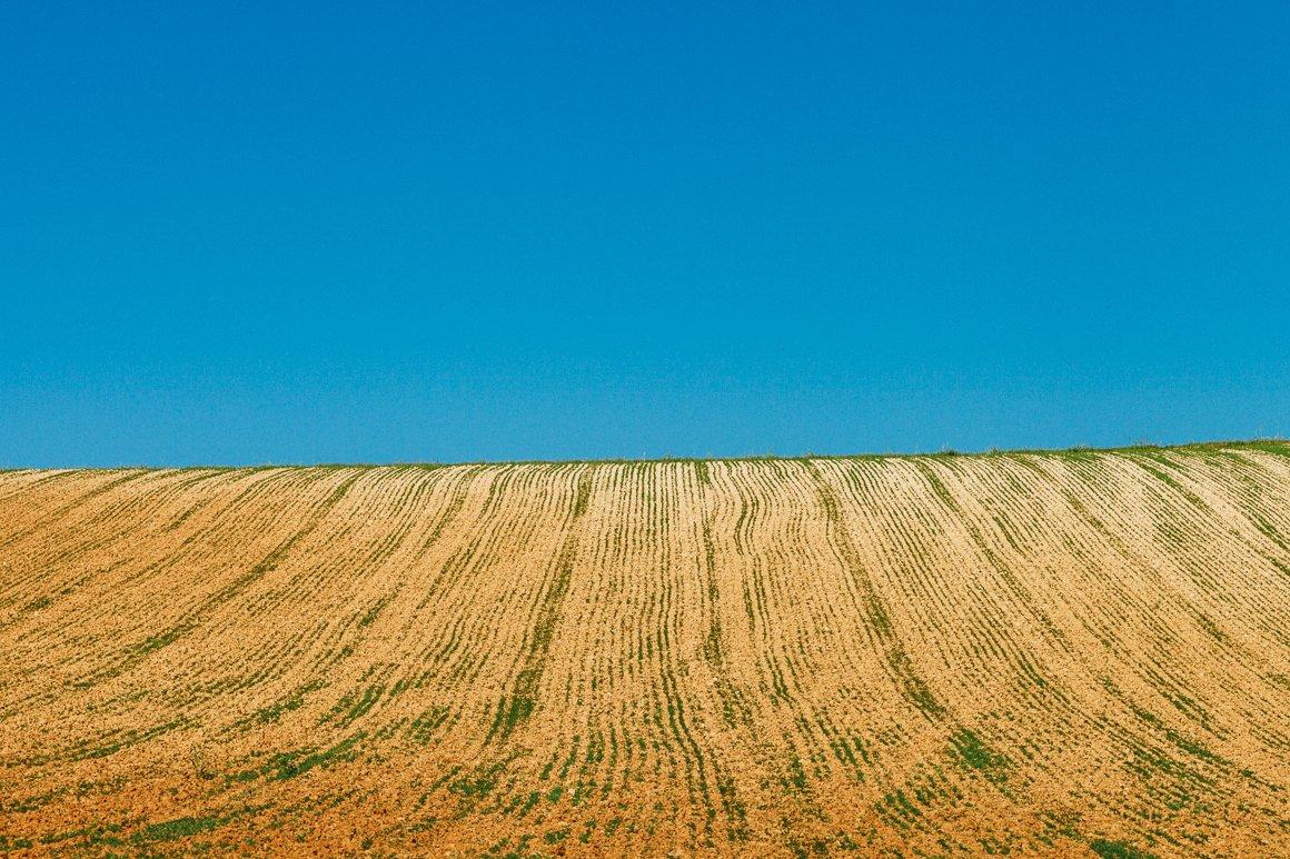 Dettaglio estivo di una collina nel territorio del Monferrato Langhe e Roero