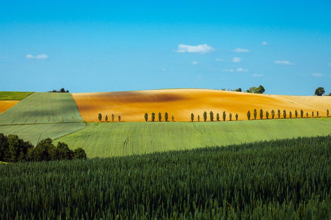 Una collinetta dorata intorno a San Salvatore Monferrato