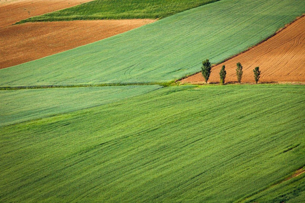 Geometrie del paesaggio del Monferrato in estate