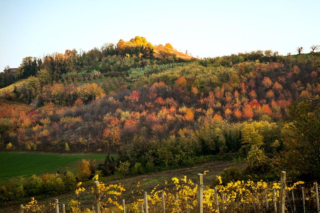 Fotografia di paesaggio. Dettaglio di una collina in autunno