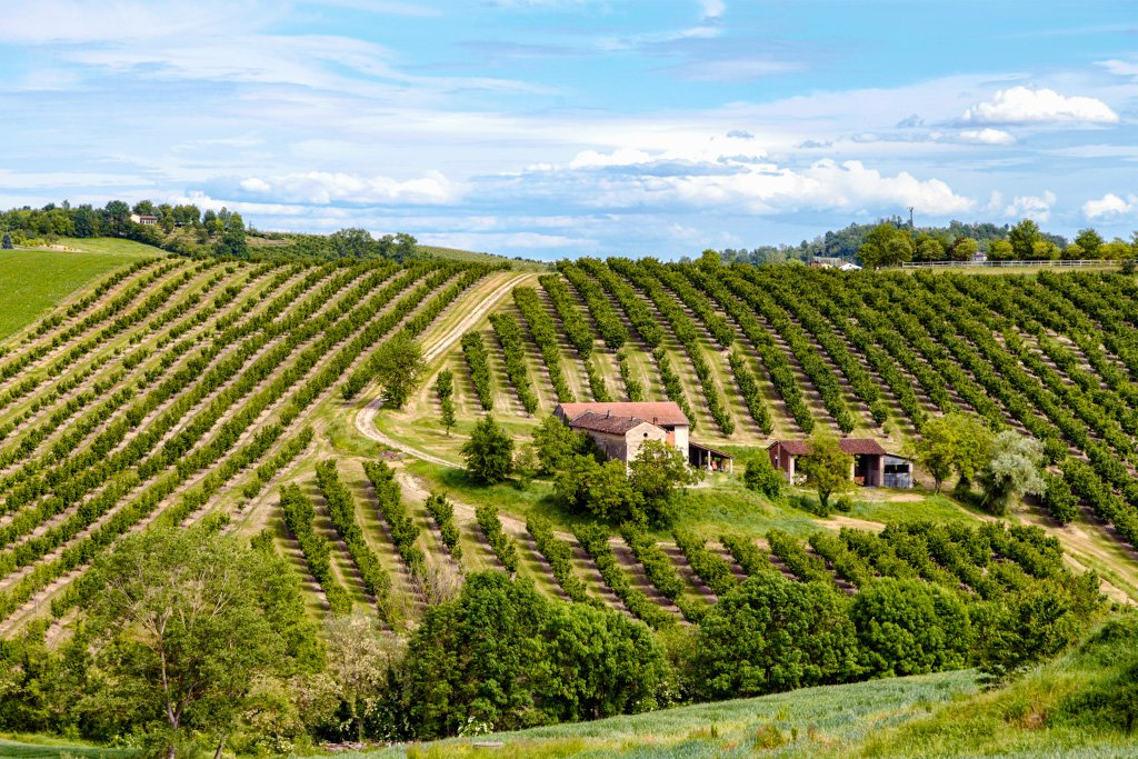 Una cascina immersa nel verde dei frutteti, tra le colline del Monferrato